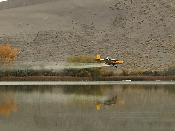 Idaho fish and game launch aerial attack on carp for Fish and game idaho