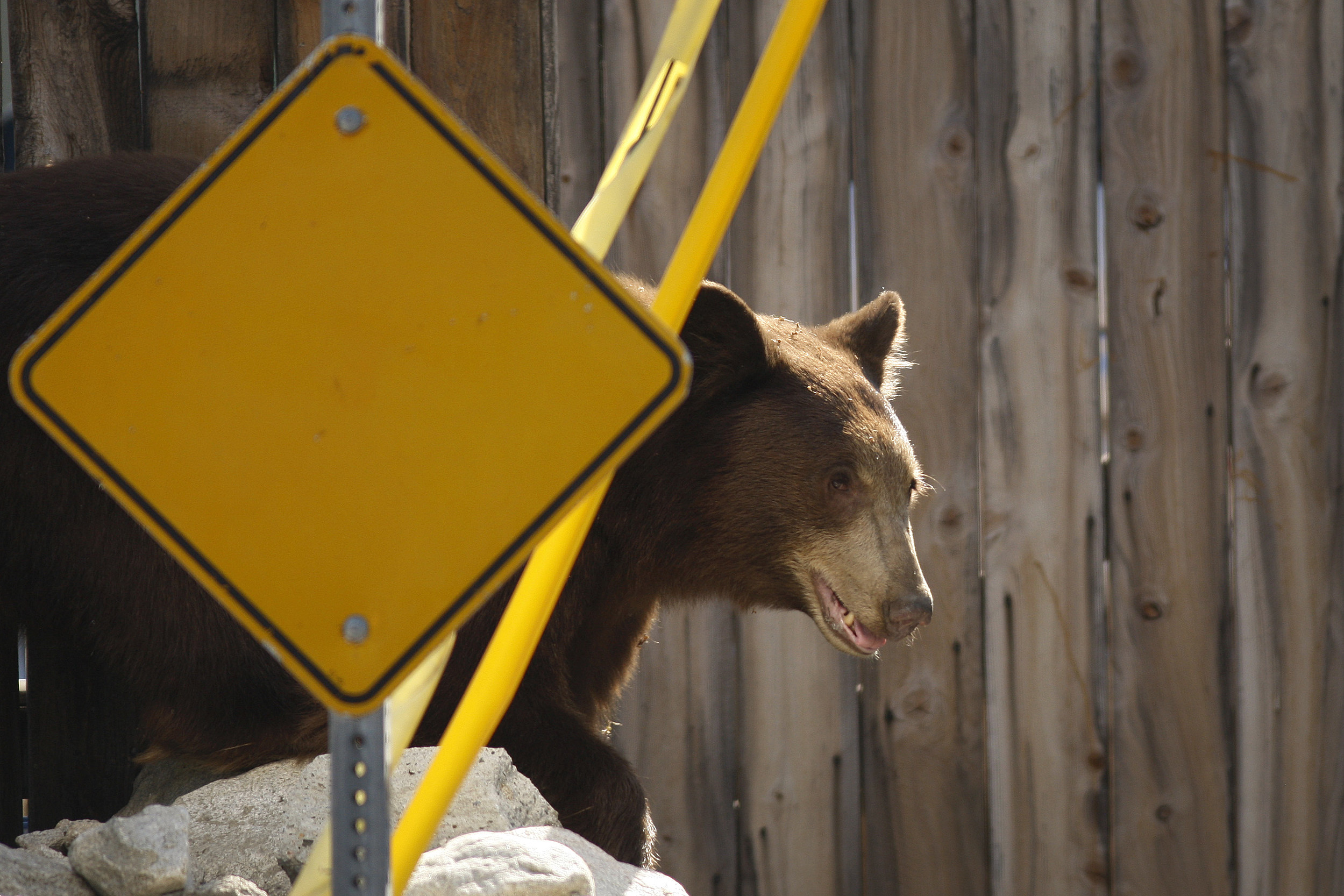Woman airlifted to hospital after bear attack near Priest Lake