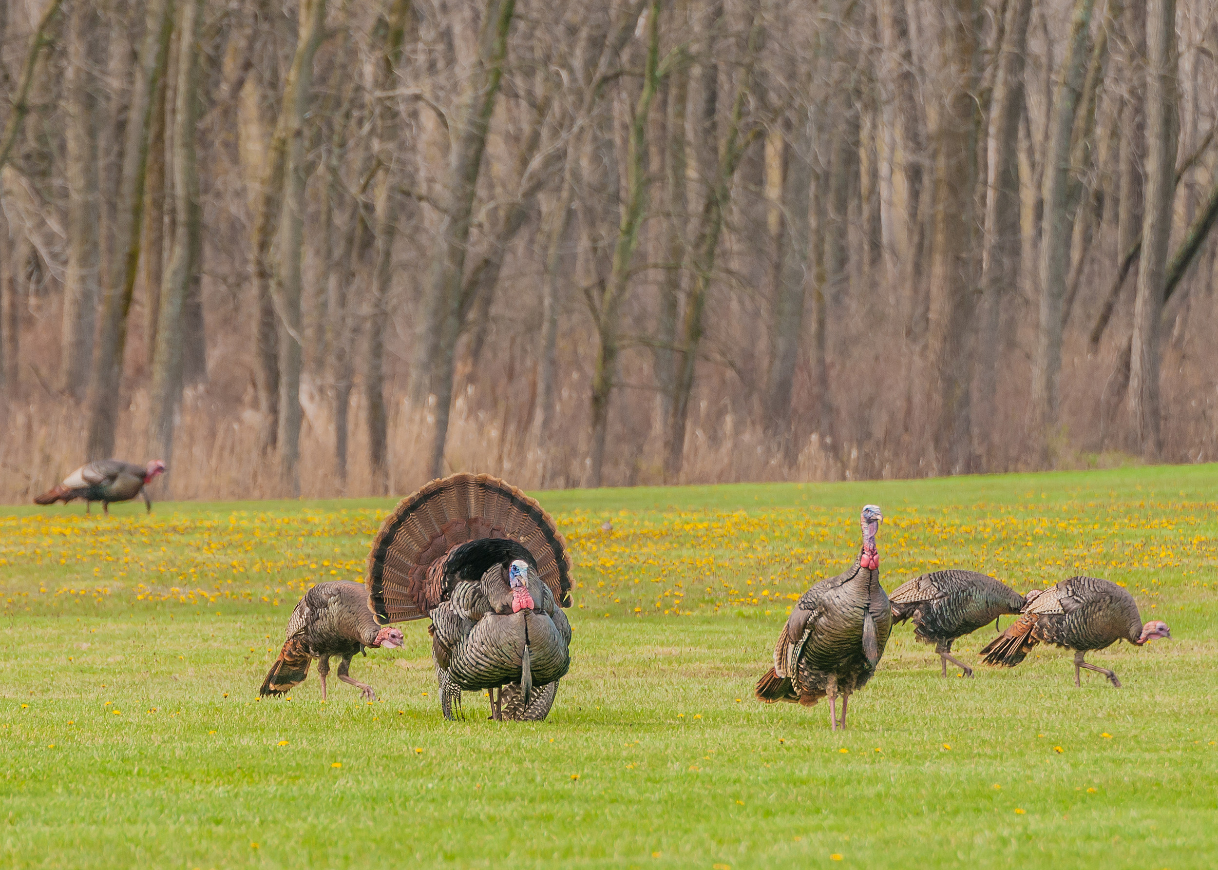 Leftover turkey controlled hunt permits available for Wisconsin fishing license cost