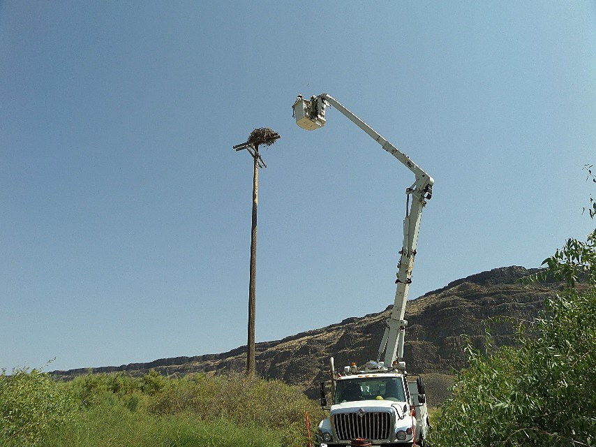 Idaho Power Co. linemen Chad Owens and Jeremy Torkelson recently helped a young osprey at Swan Falls Dam. (Photo courtesy of Idaho Power)